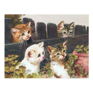 """Four Kittens"" Vintage Postcard"