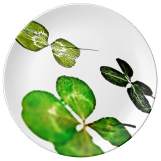 Four leaf clover happy plate