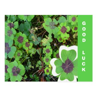 Four Leaf Clover Leaf & Pattern Good Luck Postcard