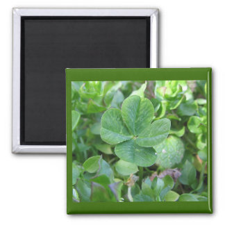 Four leaf clover fridge magnets
