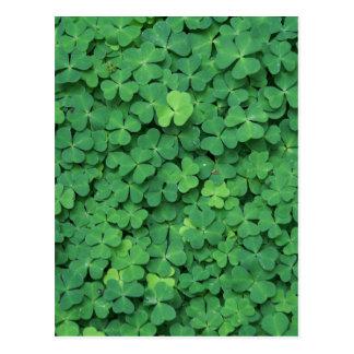 Four Leaf Clover Post Card
