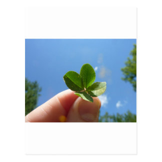 Four Leaf Clover Postcards