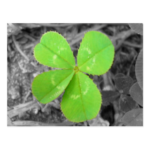 Four Leaf Clover Postcard - Black & White & Green