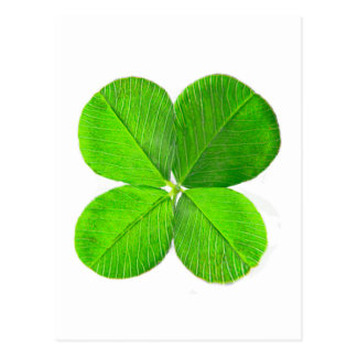 Four Leaf Clover The MUSEUM Zazzle Gifts Postcard