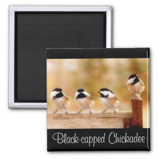 Four little chickadees magnets