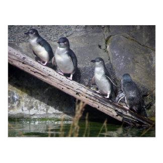Four Little Penguins Postcard