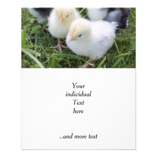 four lovely chicks personalized flyer