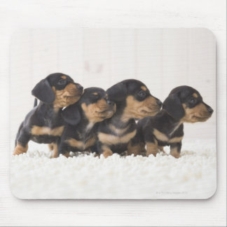 Four Mini Dachshund Mouse Pad
