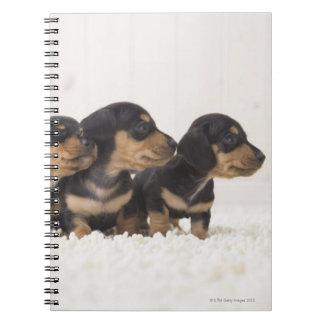 Four Mini Dachshund Spiral Notebook