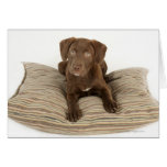 Four-Month-Old Chocolate Lab Puppy on Pillow Greeting Card