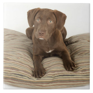 Four-Month-Old Chocolate Lab Puppy on Pillow Ceramic Tile