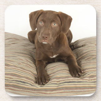Four-Month-Old Chocolate Lab Puppy on Pillow Drink Coaster