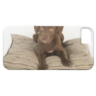 Four-Month-Old Chocolate Lab Puppy on Pillow iPhone SE/5/5s Case