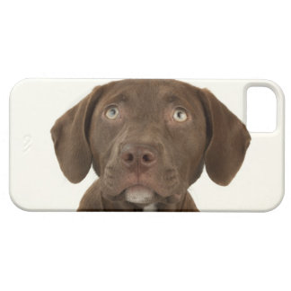Four-Month-Old Chocolate Lab Puppy Portrait iPhone SE/5/5s Case