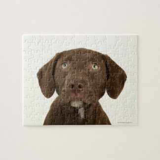 Four-Month-Old Chocolate Lab Puppy Portrait Jigsaw Puzzle