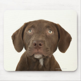 Four-Month-Old Chocolate Lab Puppy Portrait Mouse Pad