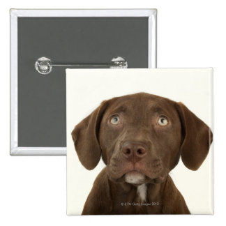 Four-Month-Old Chocolate Lab Puppy Portrait Pinback Button