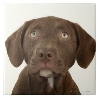 Four-Month-Old Chocolate Lab Puppy Portrait Tile