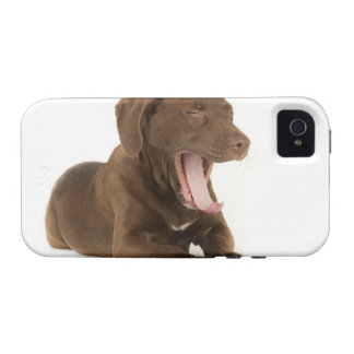 Four-Month-Old Chocolate Lab Puppy Yawning Case-Mate iPhone 4 Covers