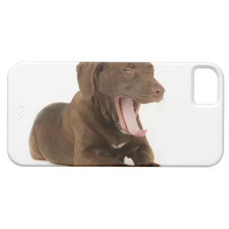 Four-Month-Old Chocolate Lab Puppy Yawning iPhone SE/5/5s Case