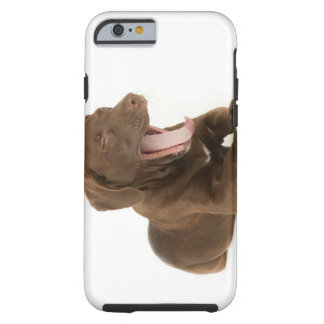 Four-Month-Old Chocolate Lab Puppy Yawning Tough iPhone 6 Case
