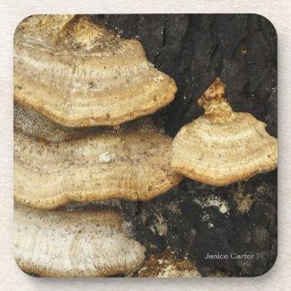Four Mushrooms Beverage Coaster