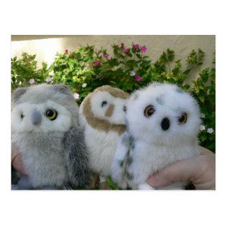 Four O'Clock Owls Postcard