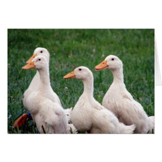 Four of a Kind, Ducklings Card