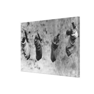 Four one-day-old ducklings pegged out of harm's canvas print