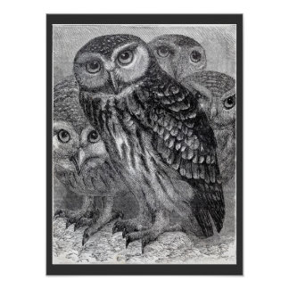 Four Owls Vintage Black and White Poster Print