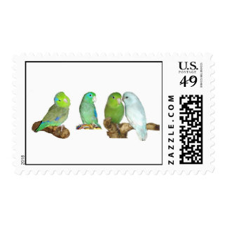 Four Parrotlets Postage Stamps