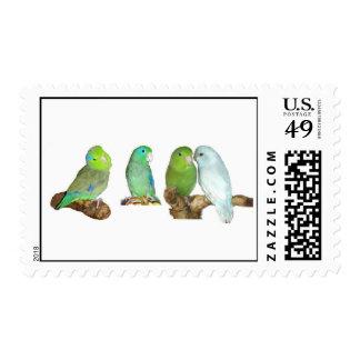 Four Parrotlets Stamp