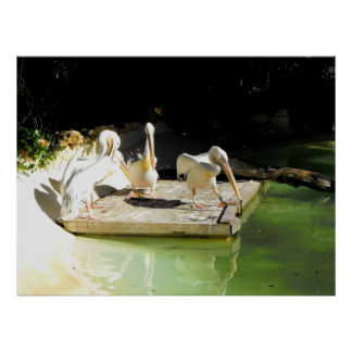 Four pelicans in springtime in Spain Poster