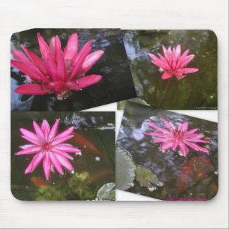 FOUR PINK WATER LILY POSTCASRDS MOUSE PAD