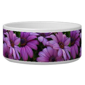 Four Purple Striped Daisies Bowl