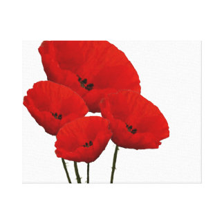 Four Red Poppy Flowers Canvas Print