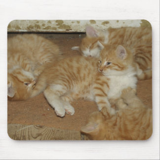Four Red Tabbies Mouse Pad
