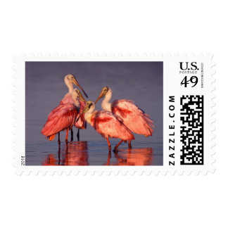 Four Roseate Spoonbills (Ajaia ajaja) at Dawn Postage Stamp