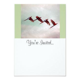 Four Scarlet Mackaws Flying 5x7 Paper Invitation Card