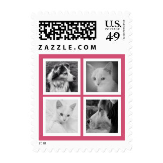 Four Special Photos in Square Frames Any Color Postage