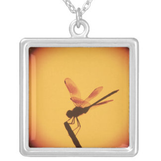 Four-spotted Pennant, Brachymesia gravida, Silver Plated Necklace