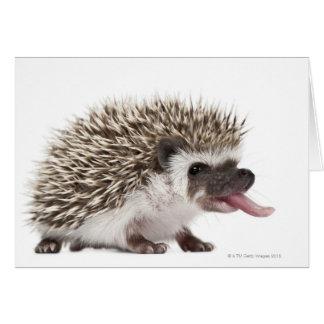 Four-toed Hedgehog - Atelerix albiventris Greeting Card