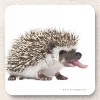 Four-toed Hedgehog - Atelerix albiventris Drink Coaster