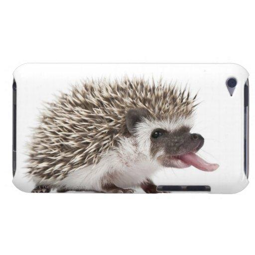 Four-toed Hedgehog - Atelerix albiventris iPod Touch Cases