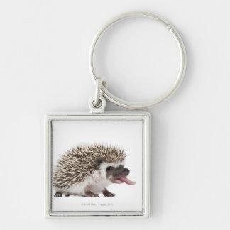 Four-toed Hedgehog - Atelerix albiventris Keychain
