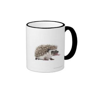 Four-toed Hedgehog - Atelerix albiventris Mugs