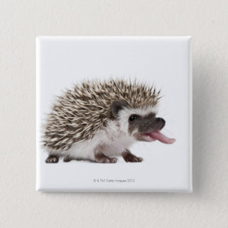 Four-toed Hedgehog - Atelerix albiventris Pinback Button