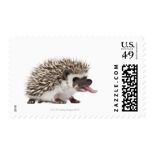 Four-toed Hedgehog - Atelerix albiventris Postage