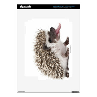 Four-toed Hedgehog - Atelerix albiventris Skin For iPad 3