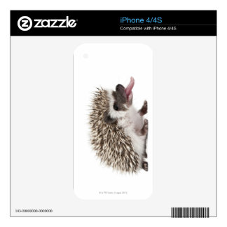 Four-toed Hedgehog - Atelerix albiventris Skins For iPhone 4